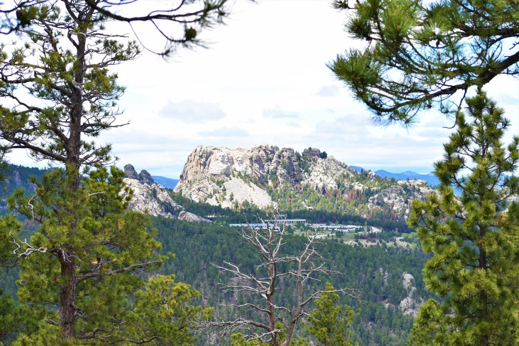 Norbeck Overlook on Iron Mountain Road looking onto Mount Rushmore in the Black Hills of South Dakota. All presidents are visible. Mount Rushmore National Park buildings are in the foreground.  Pine tree landscapes in between. View looking through pine tree.